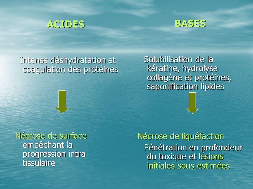 ACIDES Intense déshydratation et coagulation des protéines Intense déshydratation et coagulation des protéines Nécrose de surface empêchant la progres