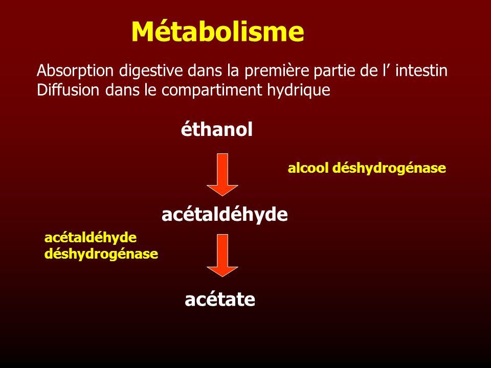 Métabolisme Absorption digestive dans la première partie de l intestin Diffusion dans le compartiment hydrique éthanol acétaldéhyde acétate alcool dés