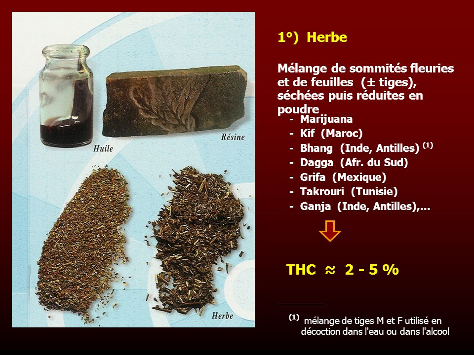 Mélange de sommités fleuries et de feuilles (± tiges), séchées puis réduites en poudre 1°) Herbe - Marijuana - Kif (Maroc) - Bhang (Inde, Antilles) (1