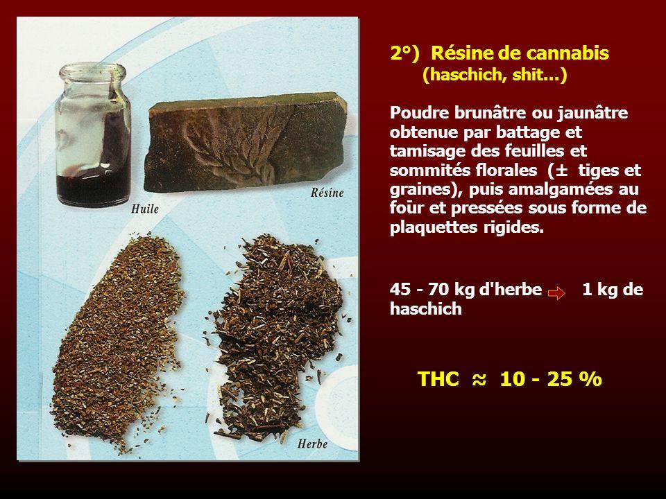 Poudre brunâtre ou jaunâtre obtenue par battage et tamisage des feuilles et sommités florales (± tiges et graines), puis amalgamées au four et pressée
