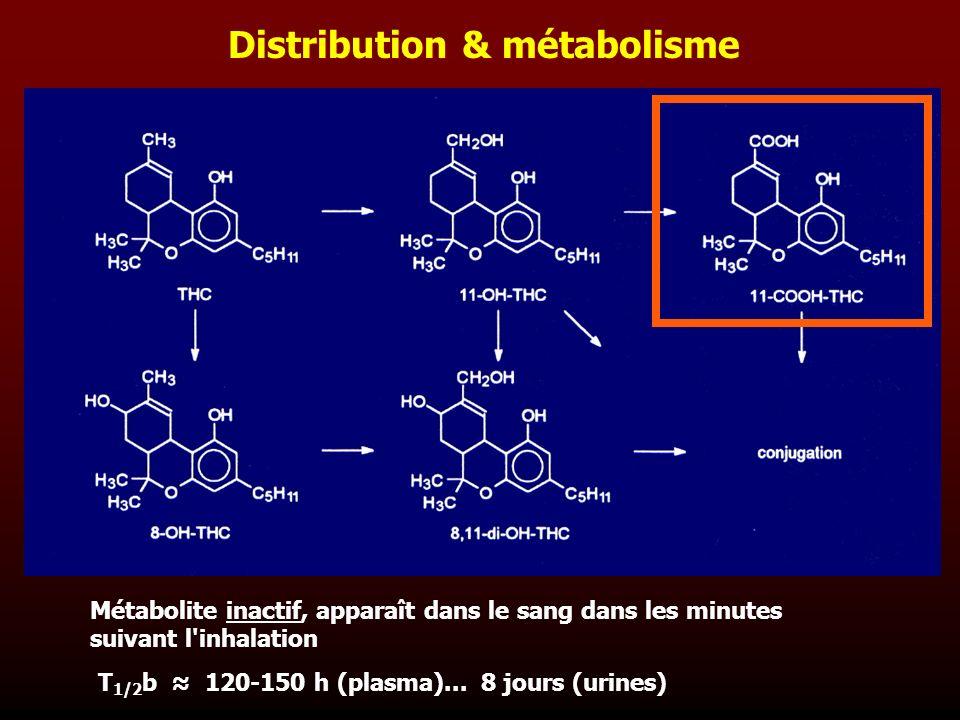 Distribution & métabolisme Métabolite inactif, apparaît dans le sang dans les minutes suivant l'inhalation T 1/2 b 120-150 h (plasma)... 8 jours (urin