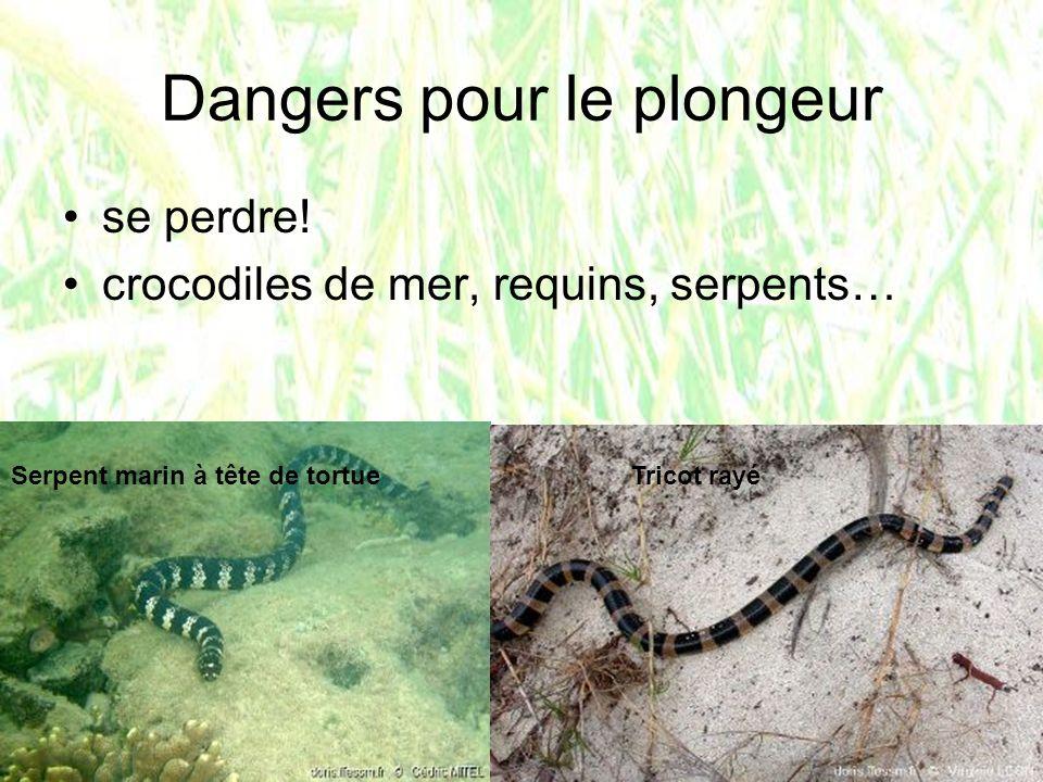 Dangers pour le plongeur se perdre! crocodiles de mer, requins, serpents… Serpent marin à tête de tortueTricot rayé