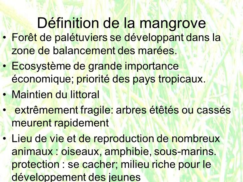 Définition de la mangrove Forêt de palétuviers se développant dans la zone de balancement des marées. Ecosystème de grande importance économique; prio