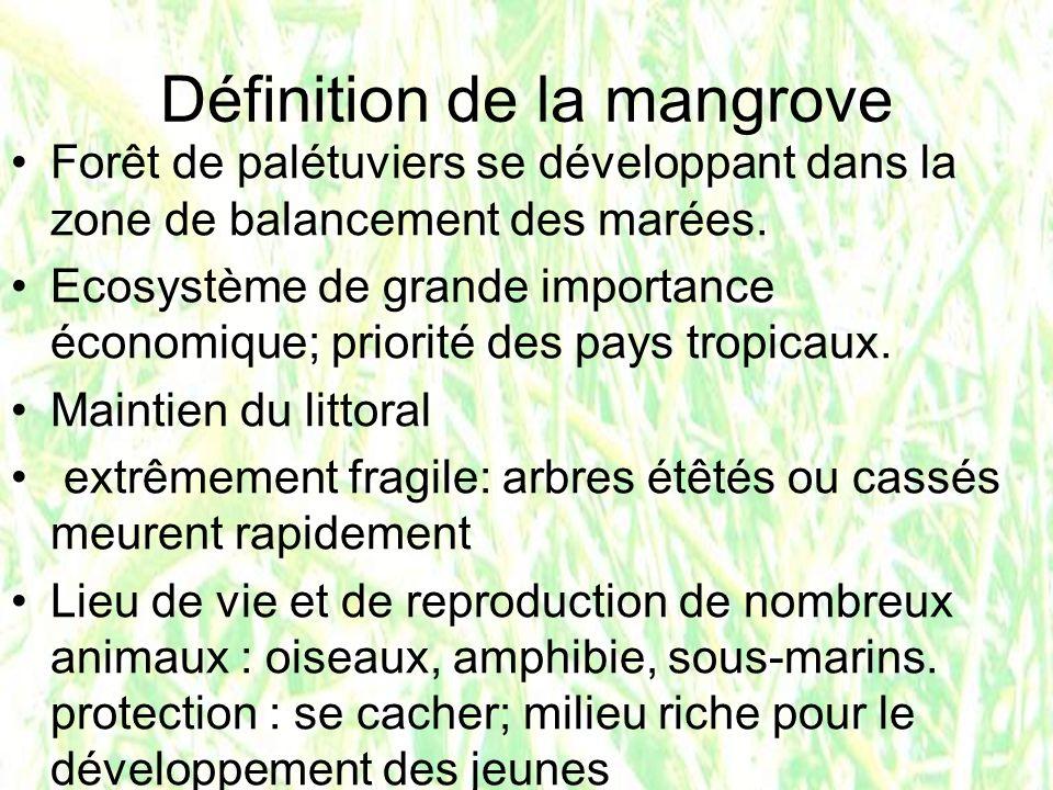 mangrove morte on peut en replanter!