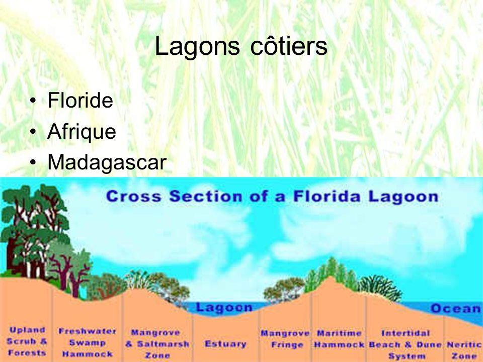 la mangrove dans le monde entre les 30 ème N et S, 180000 km2 75% des côtes: pas de concurrence dautres arbres halophyles.