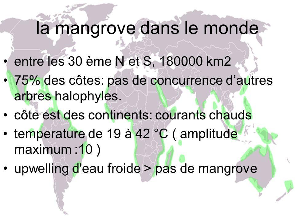la mangrove dans le monde entre les 30 ème N et S, 180000 km2 75% des côtes: pas de concurrence dautres arbres halophyles. côte est des continents: co