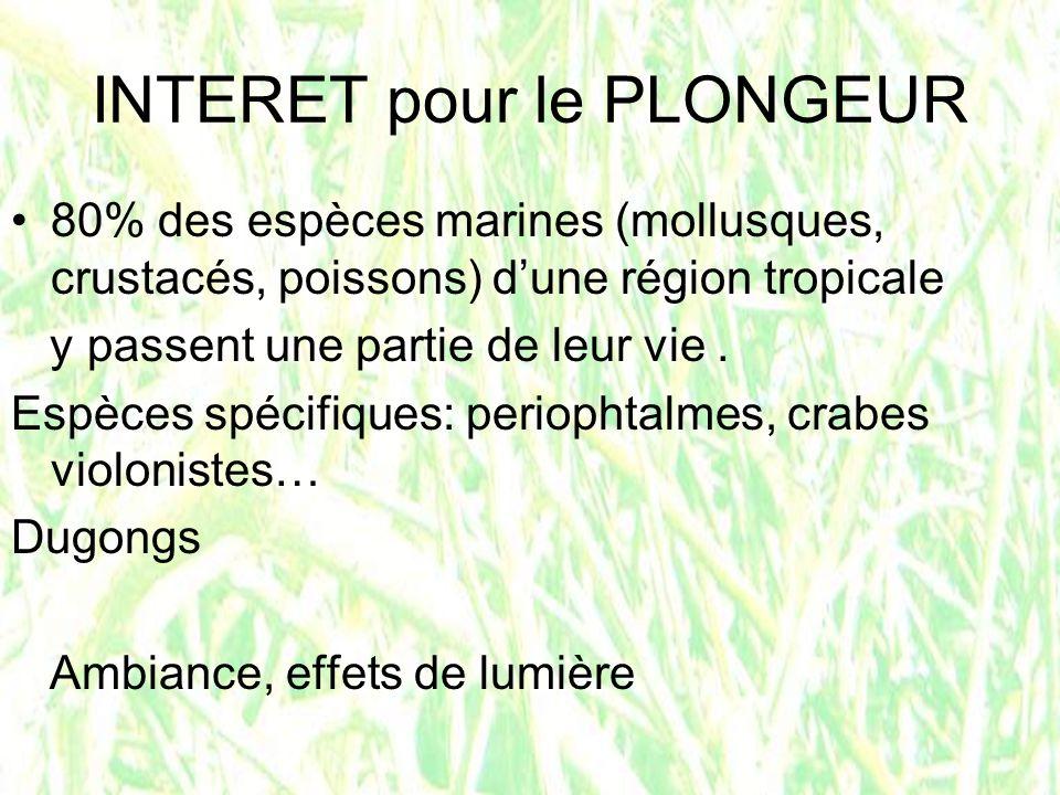 INTERET pour le PLONGEUR 80% des espèces marines (mollusques, crustacés, poissons) dune région tropicale y passent une partie de leur vie. Espèces spé
