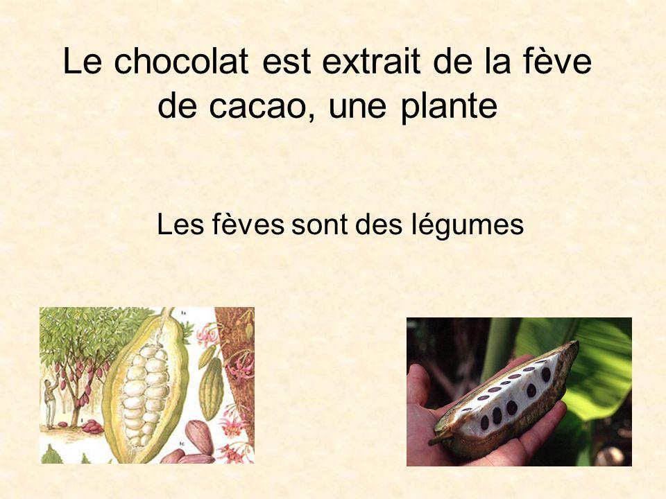 Le chocolat est extrait de la fève de cacao, une plante Les fèves sont des légumes