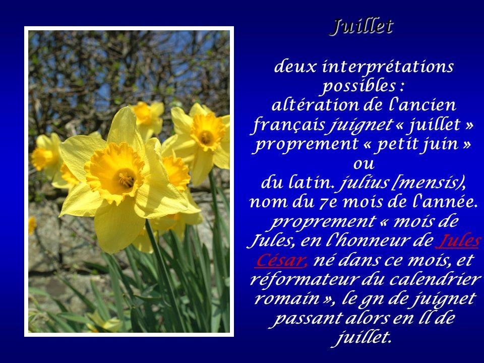 Juillet Juillet deux interprétations possibles : altération de l'ancien français juignet « juillet » proprement « petit juin » ou du latin. julius [me