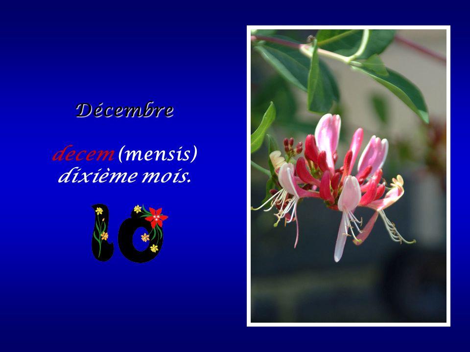 Décembre decem (mensis) dixième mois.