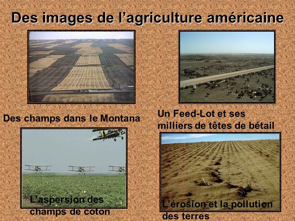 Des images de lagriculture américaine Des champs dans le Montana Un Feed-Lot et ses milliers de têtes de bétail Laspersion des champs de coton Lérosion et la pollution des terres