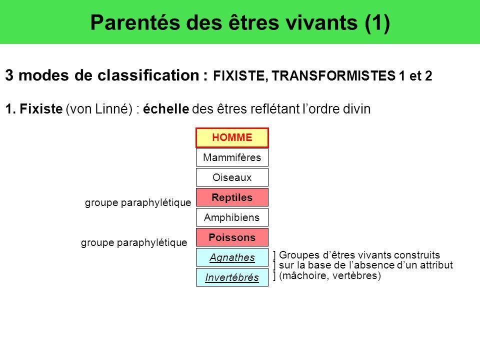 Parentés des êtres vivants (1) 3 modes de classification : FIXISTE, TRANSFORMISTES 1 et 2 1. Fixiste (von Linné) : échelle des êtres reflétant lordre