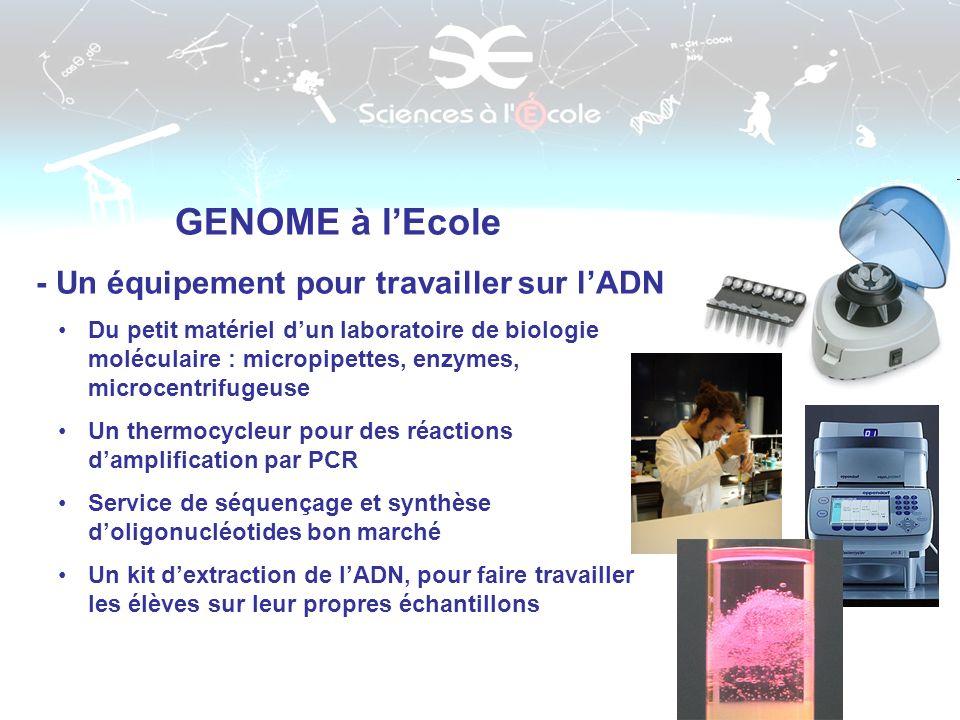 GENOME à lEcole - Un équipement pour travailler sur lADN Du petit matériel dun laboratoire de biologie moléculaire : micropipettes, enzymes, microcent