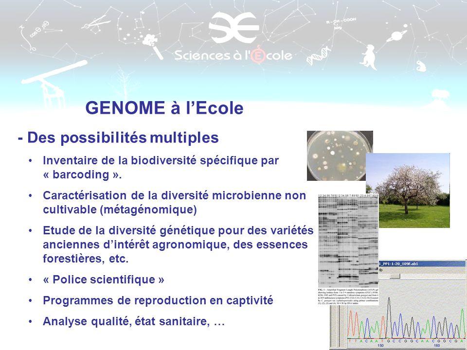 GENOME à lEcole - Des possibilités multiples Inventaire de la biodiversité spécifique par « barcoding ». Caractérisation de la diversité microbienne n