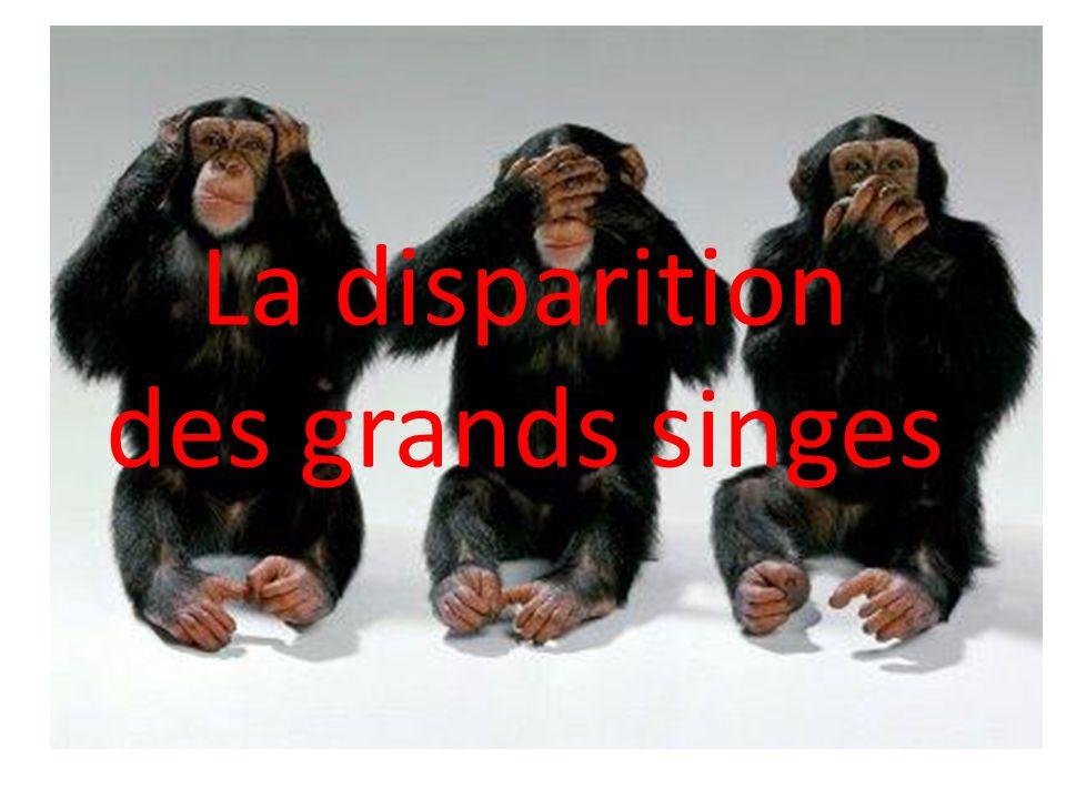 La disparition des grands singes
