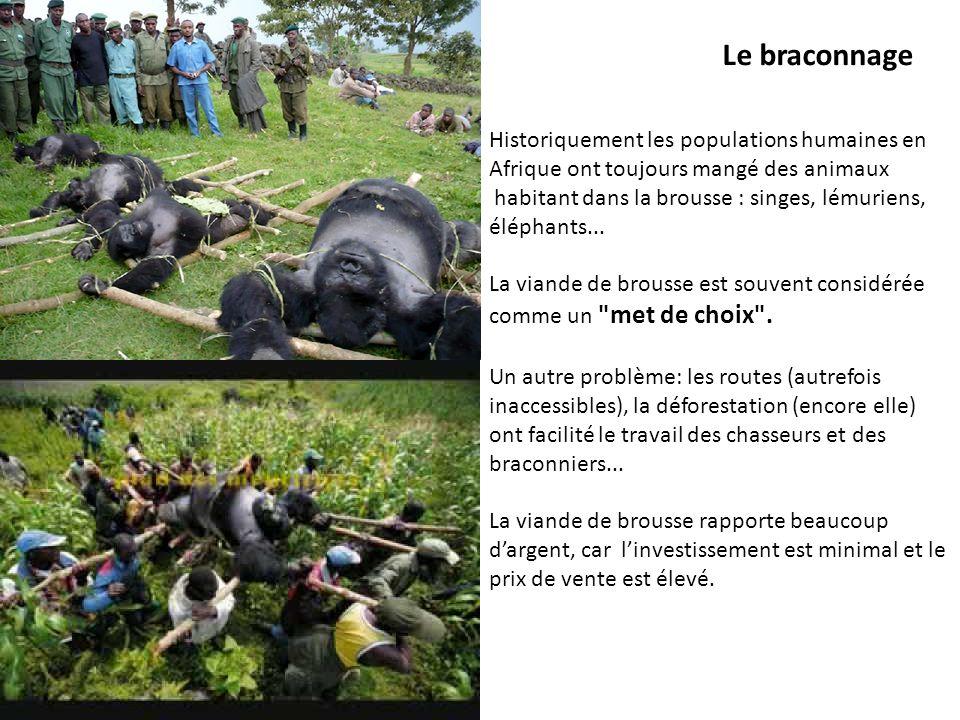 Le braconnage Historiquement les populations humaines en Afrique ont toujours mangé des animaux habitant dans la brousse : singes, lémuriens, éléphant