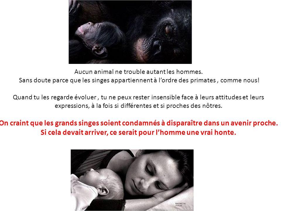 Aucun animal ne trouble autant les hommes. Sans doute parce que les singes appartiennent à lordre des primates, comme nous! Quand tu les regarde évolu