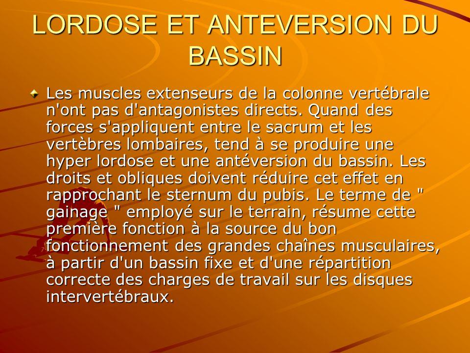 LORDOSE ET ANTEVERSION DU BASSIN Les muscles extenseurs de la colonne vertébrale n'ont pas d'antagonistes directs. Quand des forces s'appliquent entre