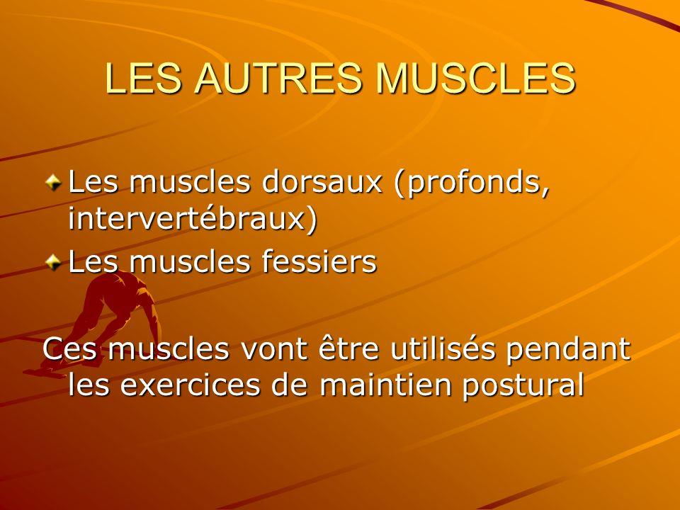 LES AUTRES MUSCLES Les muscles dorsaux (profonds, intervertébraux) Les muscles fessiers Ces muscles vont être utilisés pendant les exercices de mainti