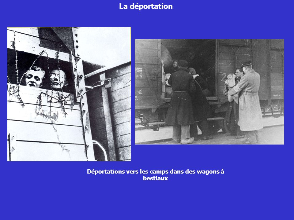 La déportation Arrivée au camp dAuschwitz sur la rampe La sélection