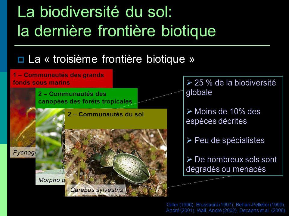 La « troisième frontière biotique » 1 – Communautés des grands fonds sous marins Pycnogonid sp 2 – Communautés des canopées des forêts tropicales Morp