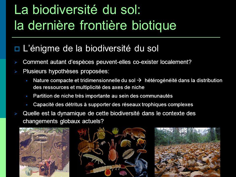 Lénigme de la biodiversité du sol Comment autant despèces peuvent-elles co-exister localement? Plusieurs hypothèses proposées: Nature compacte et trid