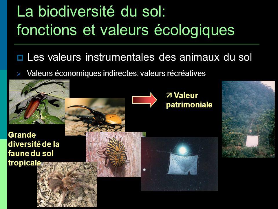 Les valeurs instrumentales des animaux du sol Valeurs économiques indirectes: valeurs récréatives Grande diversité de la faune du sol tropicale Valeur