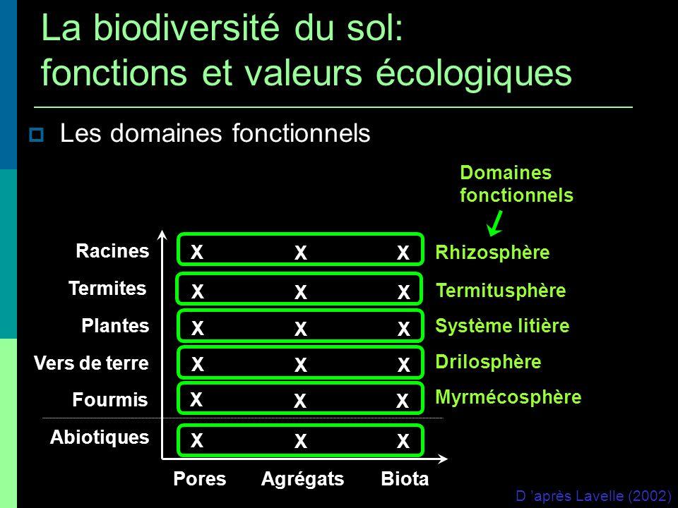 Les domaines fonctionnels Rhizosphère Termitusphère Système litière Drilosphère Myrmécosphère Racines Termites Plantes Vers de terre Fourmis Abiotique