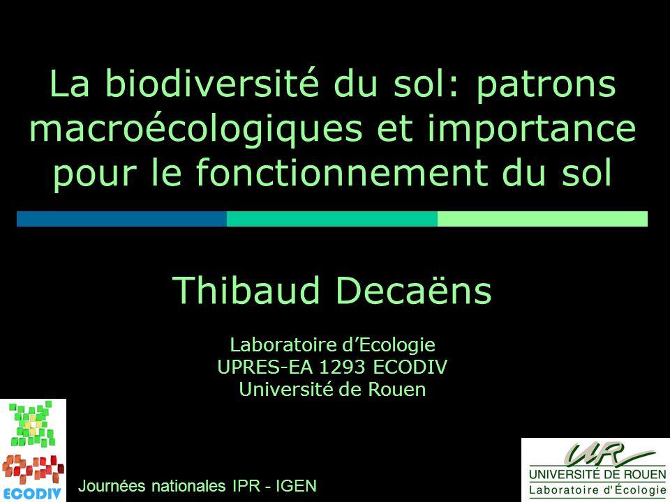 Thibaud Decaëns Laboratoire dEcologie UPRES-EA 1293 ECODIV Université de Rouen La biodiversité du sol: patrons macroécologiques et importance pour le