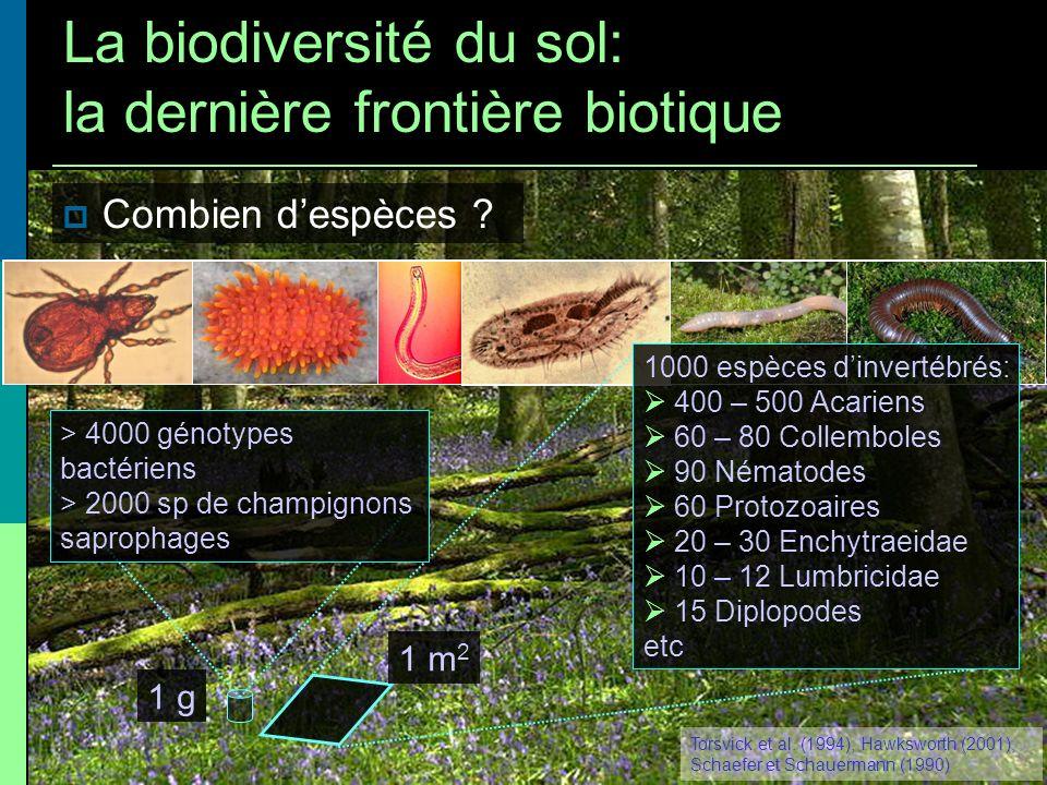 1 m 2 1000 espèces dinvertébrés: 400 – 500 Acariens 60 – 80 Collemboles 90 Nématodes 60 Protozoaires 20 – 30 Enchytraeidae 10 – 12 Lumbricidae 15 Dipl