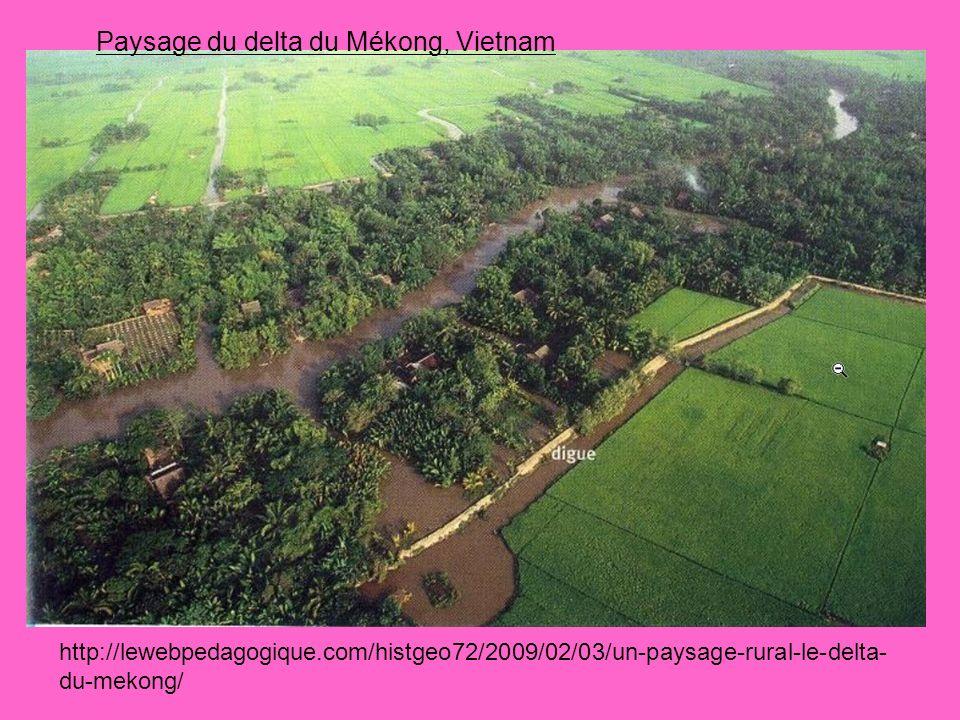 Coupe dun paysage de rizière Diguettes Rizières en eau Casier Grande digue Arbres et maisons Fleuve Mékong Canal dirrigation