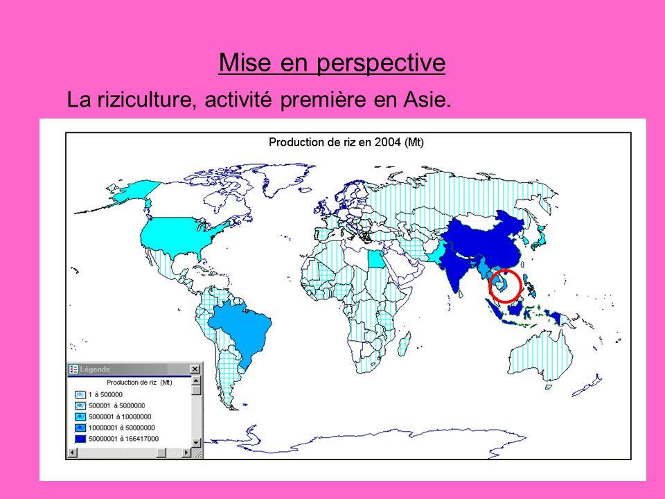Mise en perspective La riziculture, activité première en Asie.