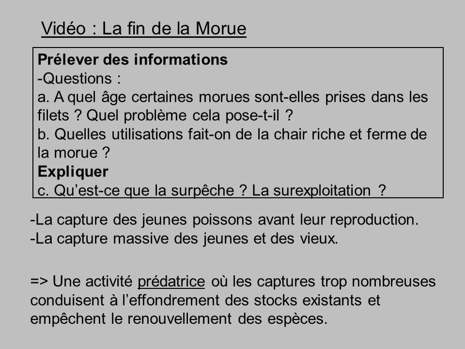 Vidéo : La fin de la Morue Prélever des informations -Questions : a.