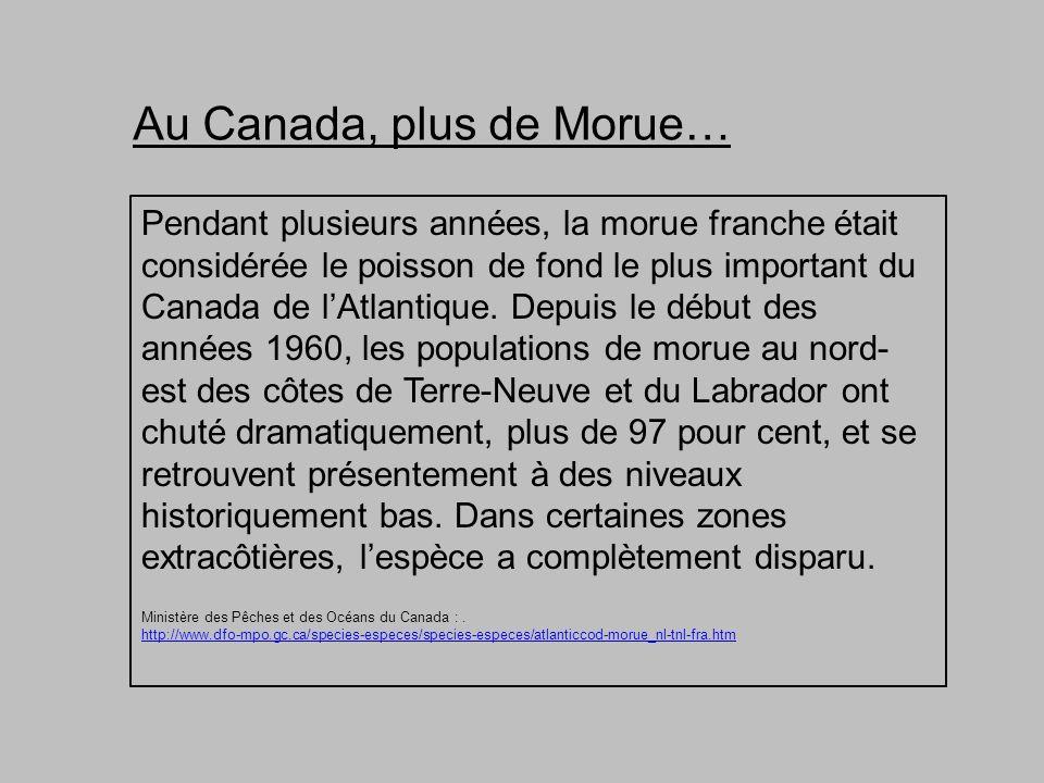 Pendant plusieurs années, la morue franche était considérée le poisson de fond le plus important du Canada de lAtlantique.