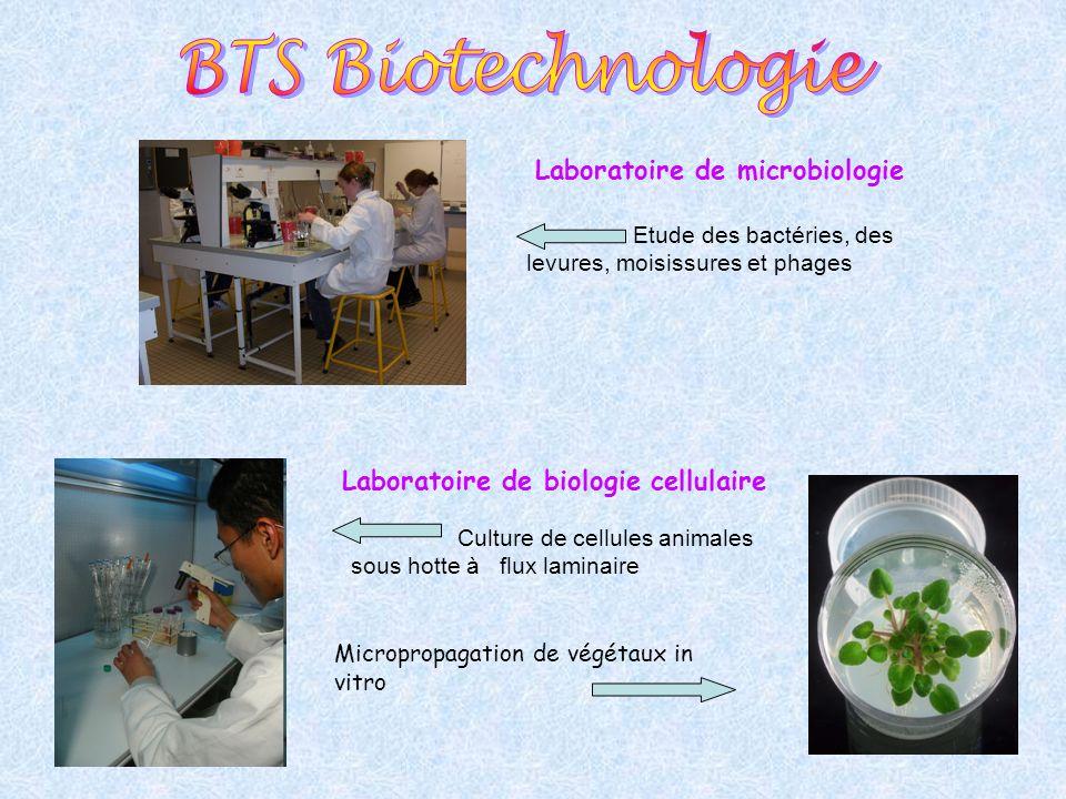 Laboratoire de biologie cellulaire Culture de cellules animales sous hotte à flux laminaire Micropropagation de végétaux in vitro Laboratoire de micro