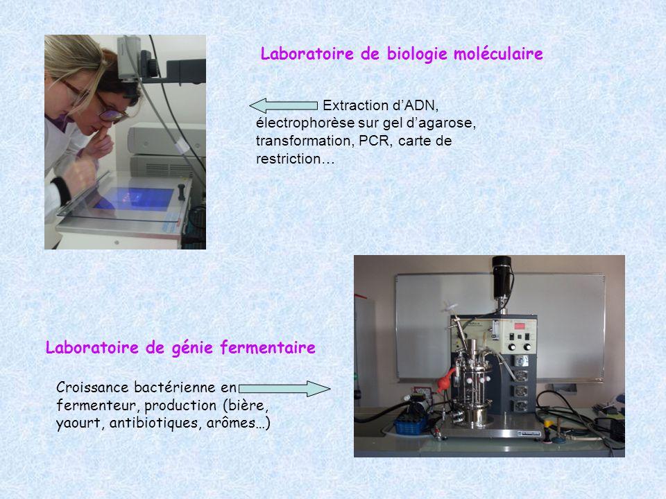 Laboratoire de biologie moléculaire Extraction dADN, électrophorèse sur gel dagarose, transformation, PCR, carte de restriction… Croissance bactérienn