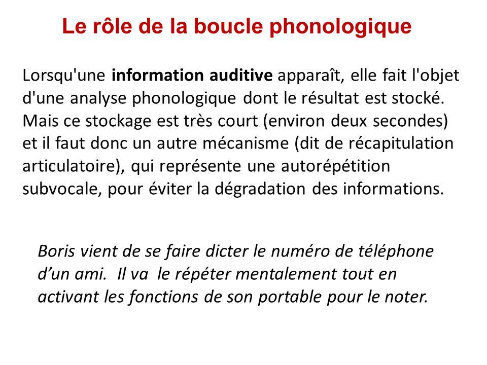 Le rôle de la boucle phonologique Lorsqu'une information auditive apparaît, elle fait l'objet d'une analyse phonologique dont le résultat est stocké.