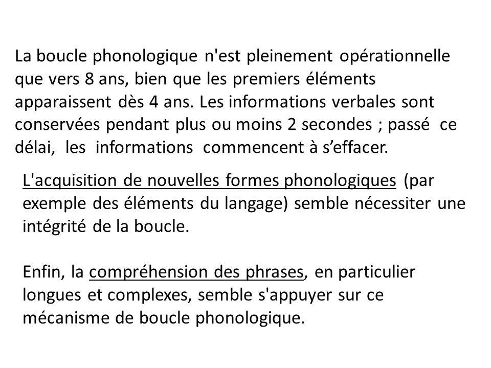 La boucle phonologique n'est pleinement opérationnelle que vers 8 ans, bien que les premiers éléments apparaissent dès 4 ans. Les informations verbale
