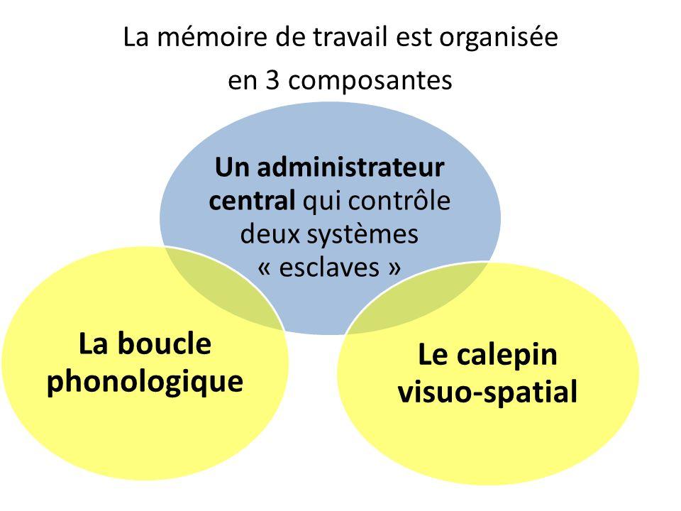 La mémoire de travail est organisée en 3 composantes Un administrateur central qui contrôle deux systèmes « esclaves » La boucle phonologique Le calep