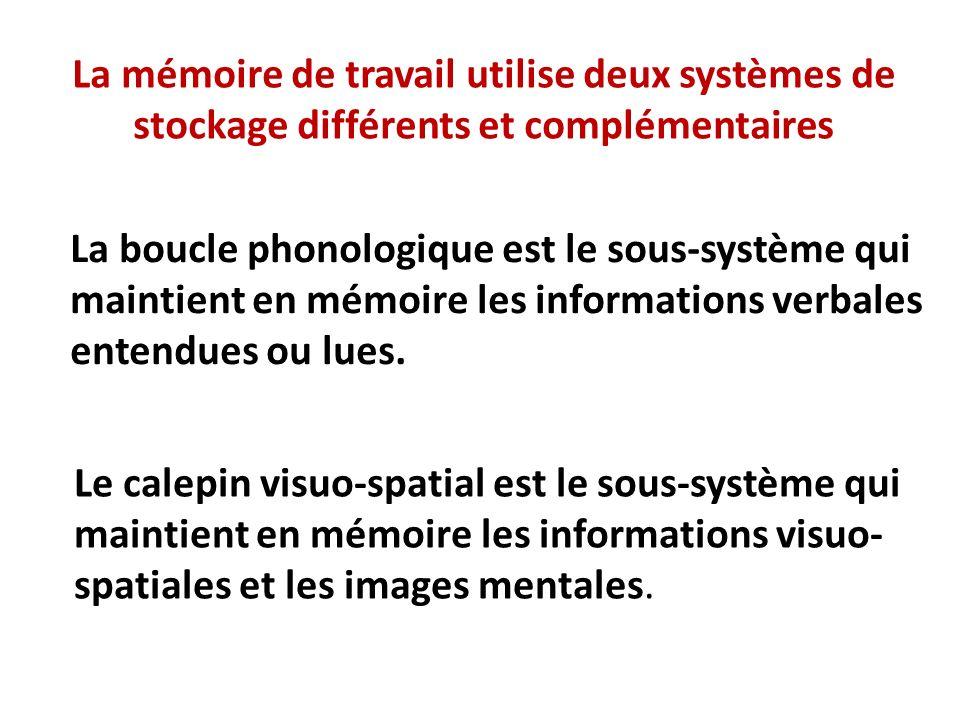 La mémoire de travail utilise deux systèmes de stockage différents et complémentaires La boucle phonologique est le sous-système qui maintient en mémo