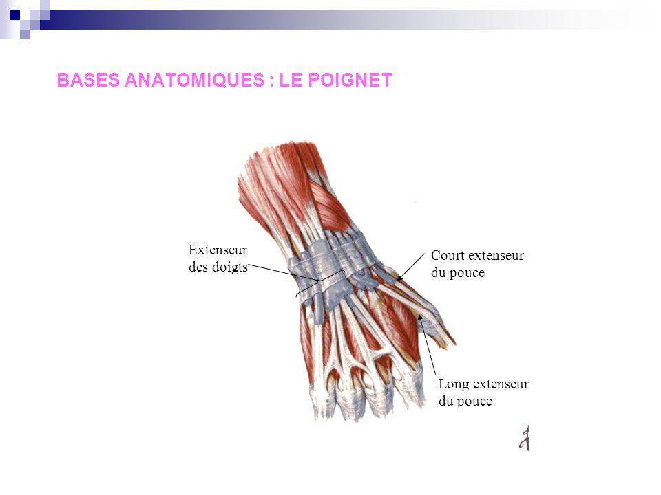 BASES ANATOMIQUES : LE POIGNET Long palmaire + ligament annulaire Artère radiale Long fléchisseur du pouce Ligament rétinaculaire médian Artère cubita