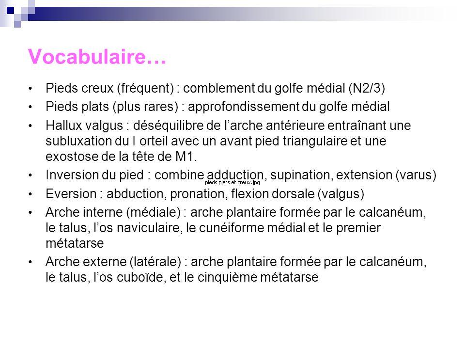 Rappels anatomiques Articulation tibio-tarsienne : articulation entre tibia/péroné (reliés par) en tenon et mortaise, la trochlée du talus (astragale)