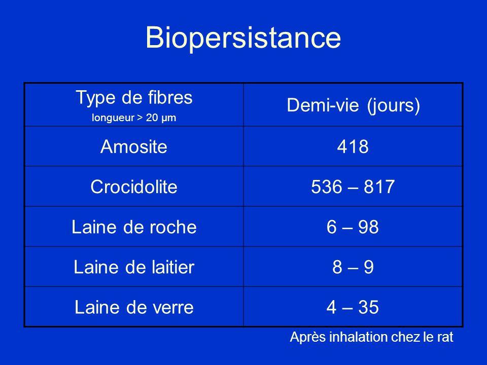 Biopersistance Type de fibres longueur > 20 µm Demi-vie (jours) Amosite418 Crocidolite536 – 817 Laine de roche6 – 98 Laine de laitier8 – 9 Laine de ve