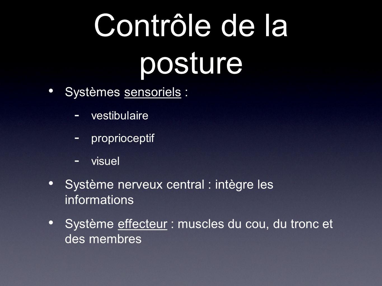 Contrôle de la posture Systèmes sensoriels : - vestibulaire - proprioceptif - visuel Système nerveux central : intègre les informations Système effect