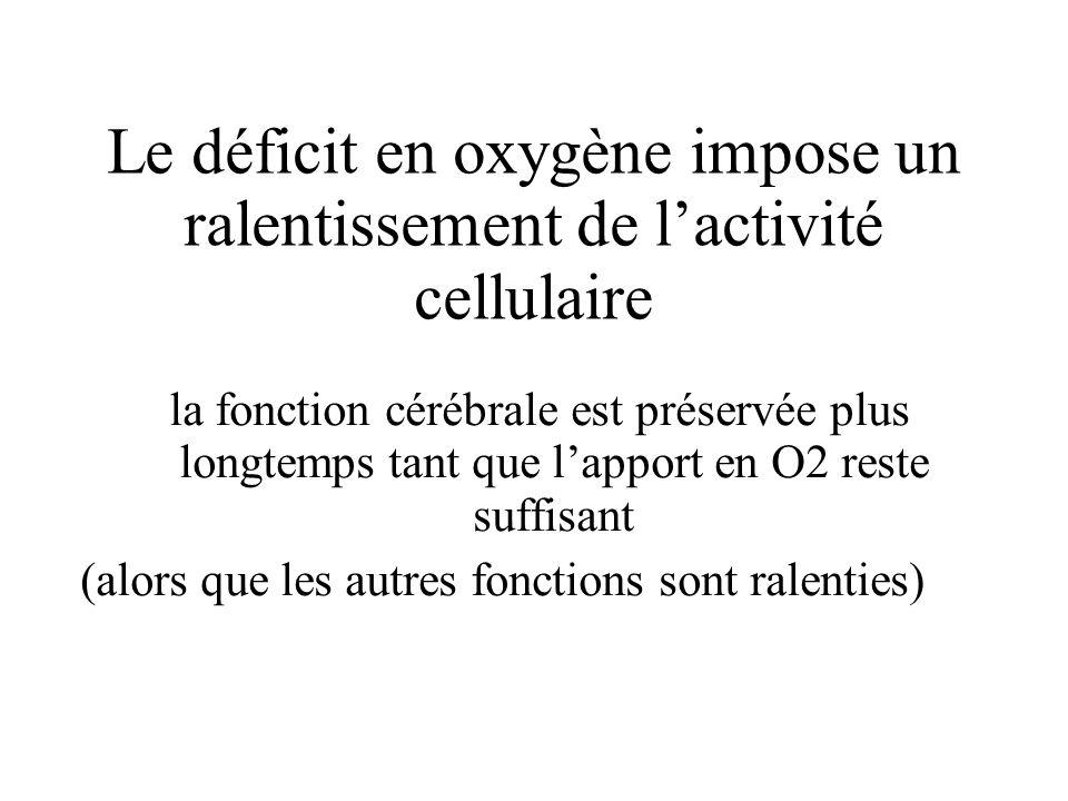 Le déficit en oxygène impose un ralentissement de lactivité cellulaire la fonction cérébrale est préservée plus longtemps tant que lapport en O2 reste