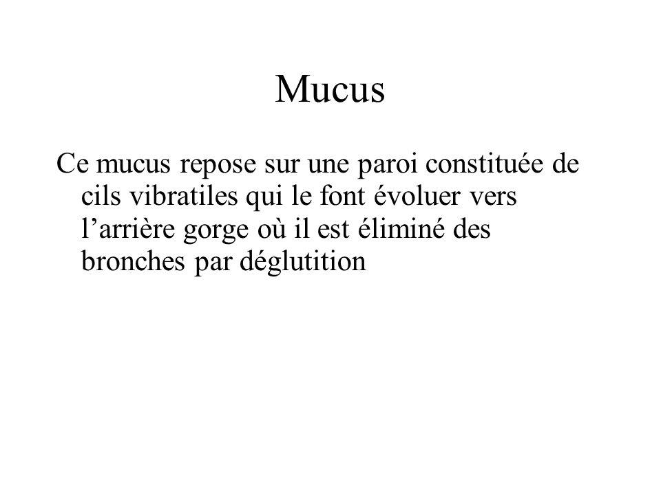 Mucus Ce mucus repose sur une paroi constituée de cils vibratiles qui le font évoluer vers larrière gorge où il est éliminé des bronches par déglutiti