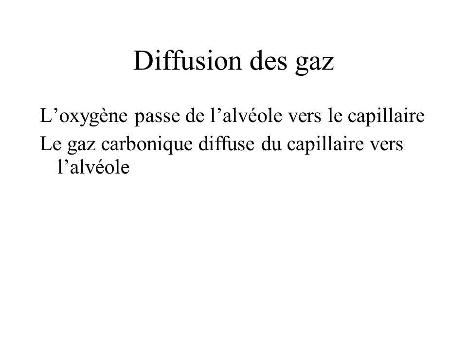 Diffusion des gaz Loxygène passe de lalvéole vers le capillaire Le gaz carbonique diffuse du capillaire vers lalvéole