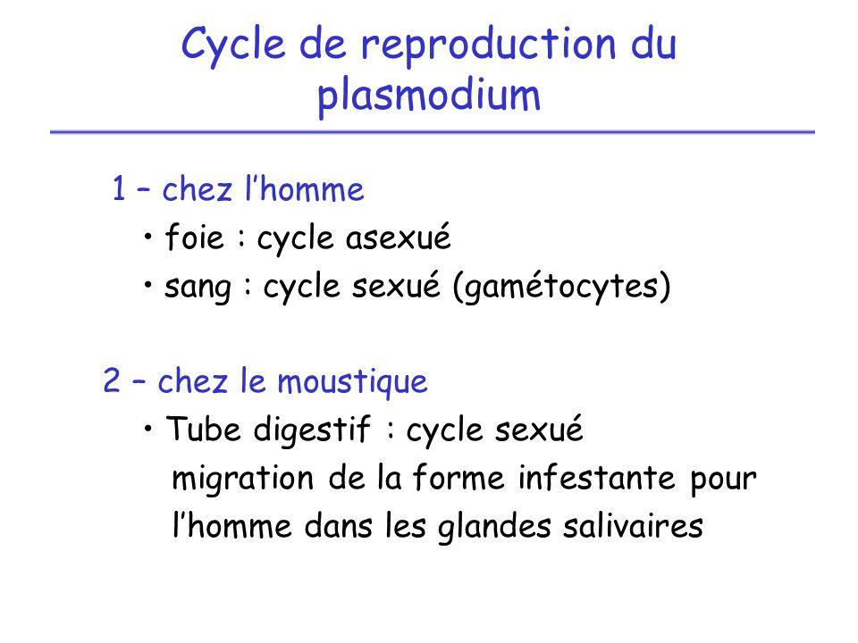 Cycle de reproduction du plasmodium 1 – chez lhomme foie : cycle asexué sang : cycle sexué (gamétocytes) 2 – chez le moustique Tube digestif : cycle s
