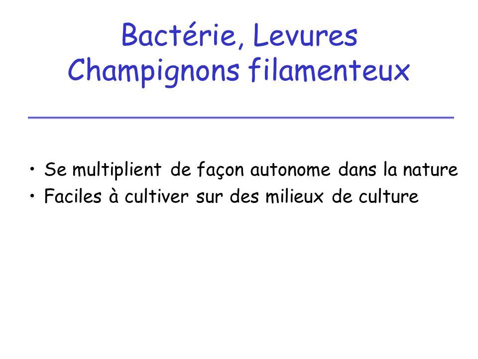 1 - Bactéries, Levures multiplication par scissiparité (simple division) pour les bactéries multiplication par bourgeonnement pour les levures
