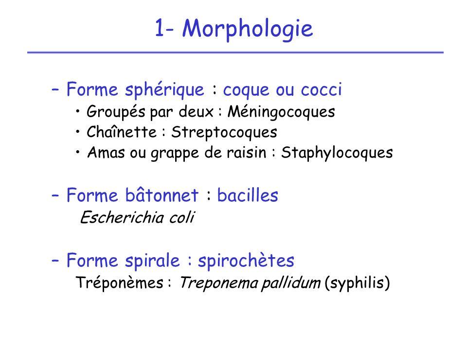 –Forme sphérique : coque ou cocci Groupés par deux : Méningocoques Chaînette : Streptocoques Amas ou grappe de raisin : Staphylocoques –Forme bâtonnet